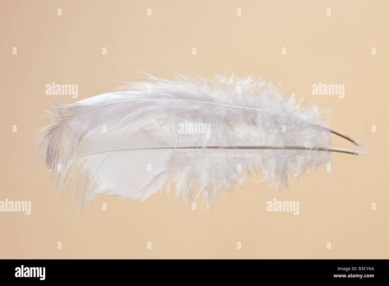 Weißes Huhn Feder auf Spiegel Stockbild