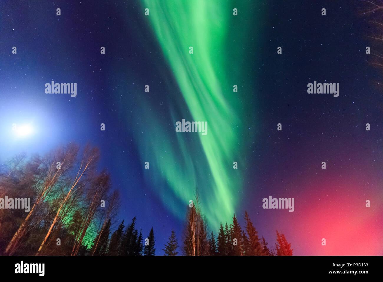 Aurora borealis, Northern Lights, in der Nähe von Fairbanks, Alaska Stockbild