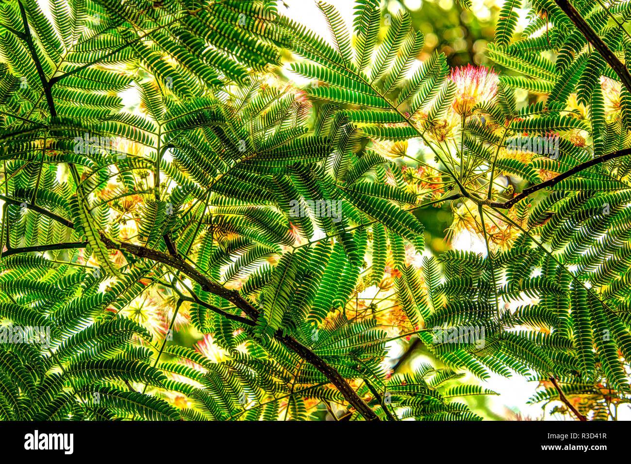 Unter Blick auf grüne Blätter als Hintergrund. Green Lake, Seattle, WA, USA Stockbild