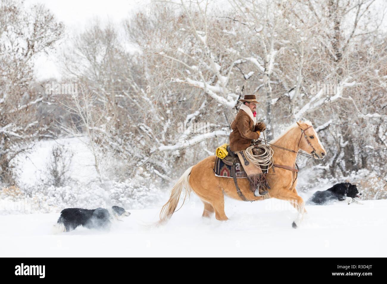 Cowboy Reiter sein Pferd im Winter, Versteck Ranch, Shell, Wyoming. (MR, PR) Stockbild