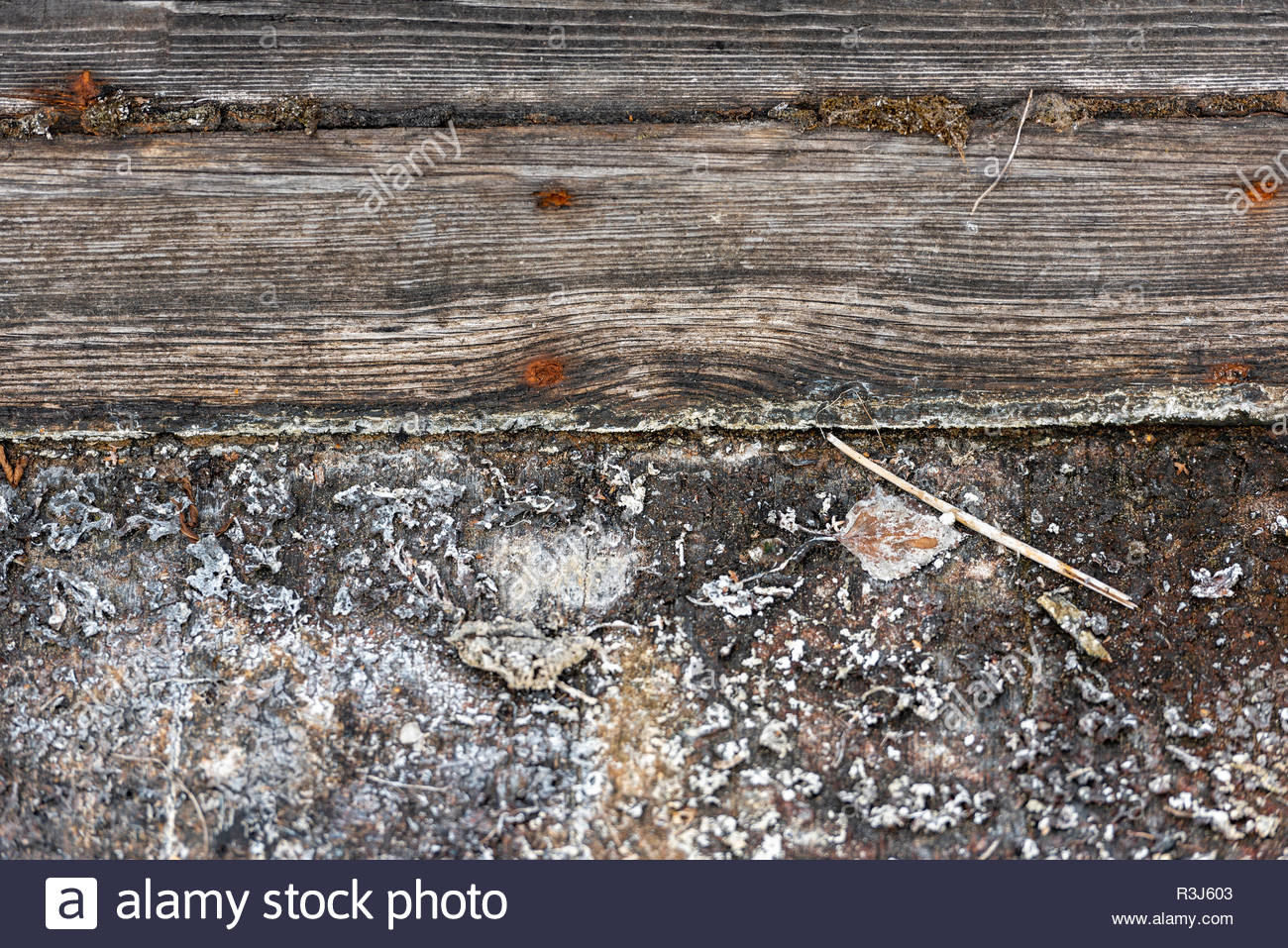 Holzplanken eines alten Kahns aus dem Spreewald Stockbild