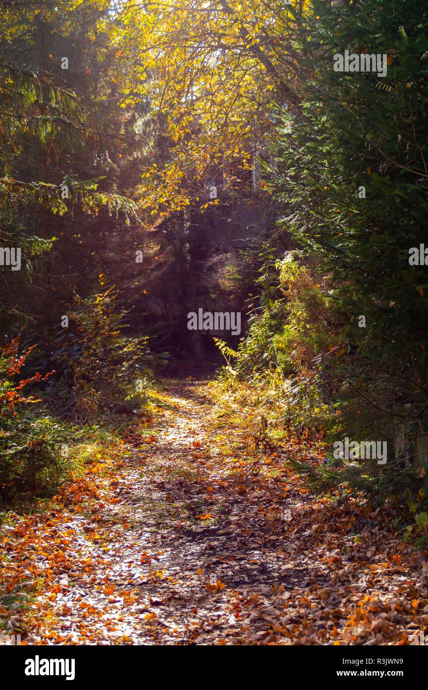 Herbstimmung im Wald Stockbild