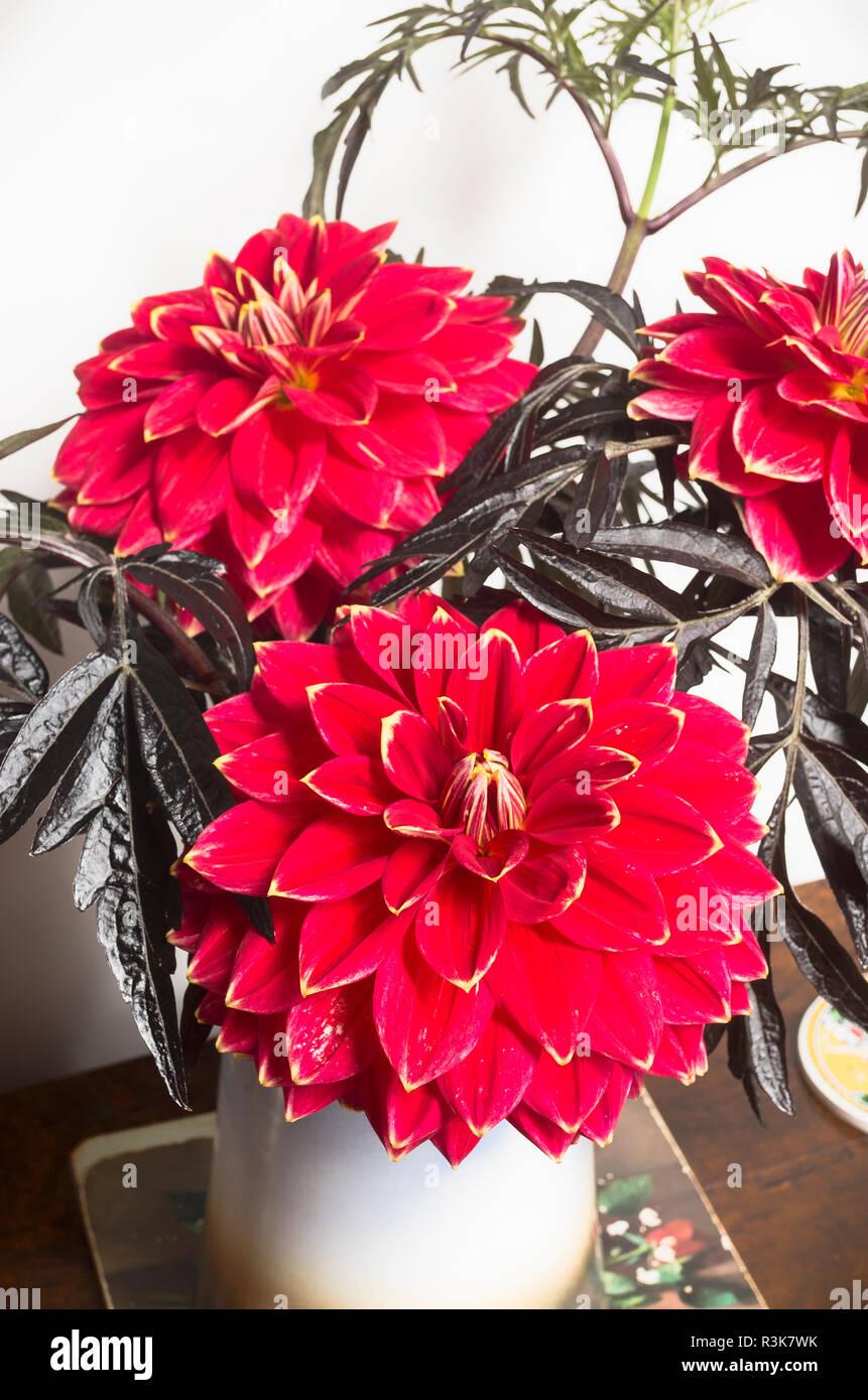 Hallenbad Haus Blumenschmuck mit Blüten Dahlie Herr Optimist und sambucus Laub Stockbild
