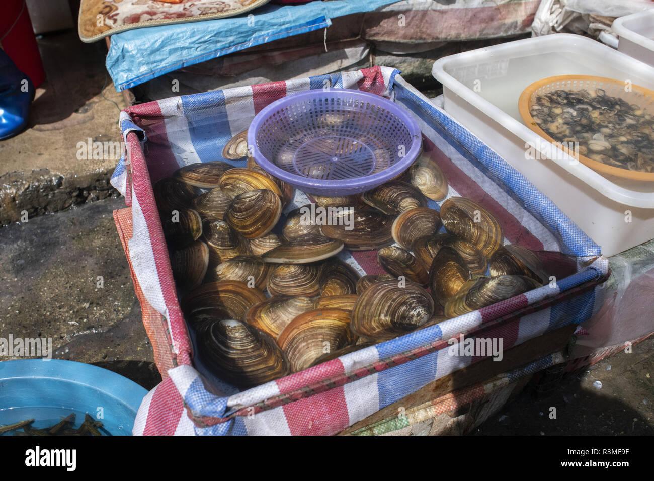 Miesmuschel (Anodonta sp) auf dem Markt von Dali, Yunnan, China verkauft. Stockbild