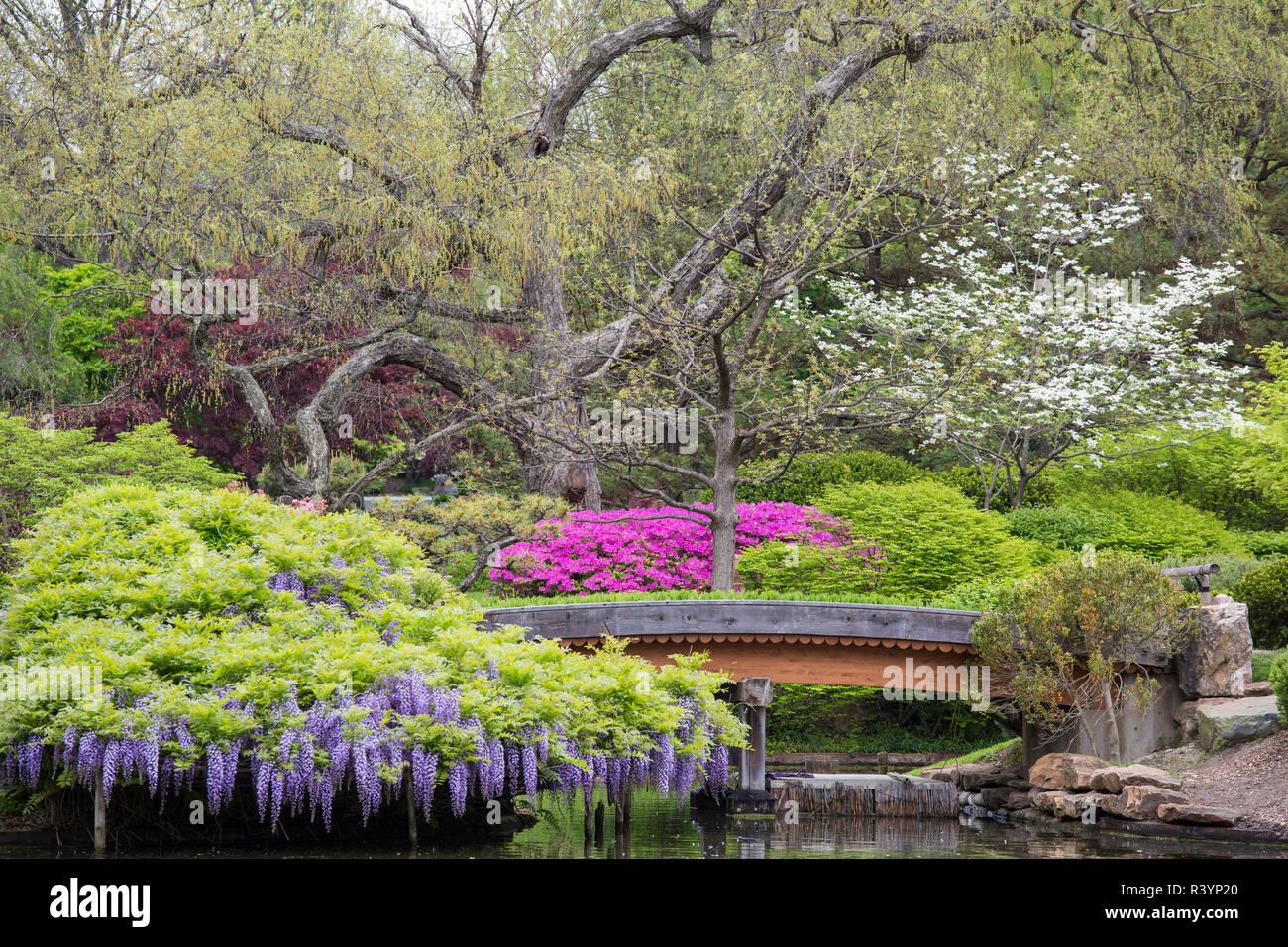 Missouri Botanical Garden Flower Stockfotos Missouri Botanical