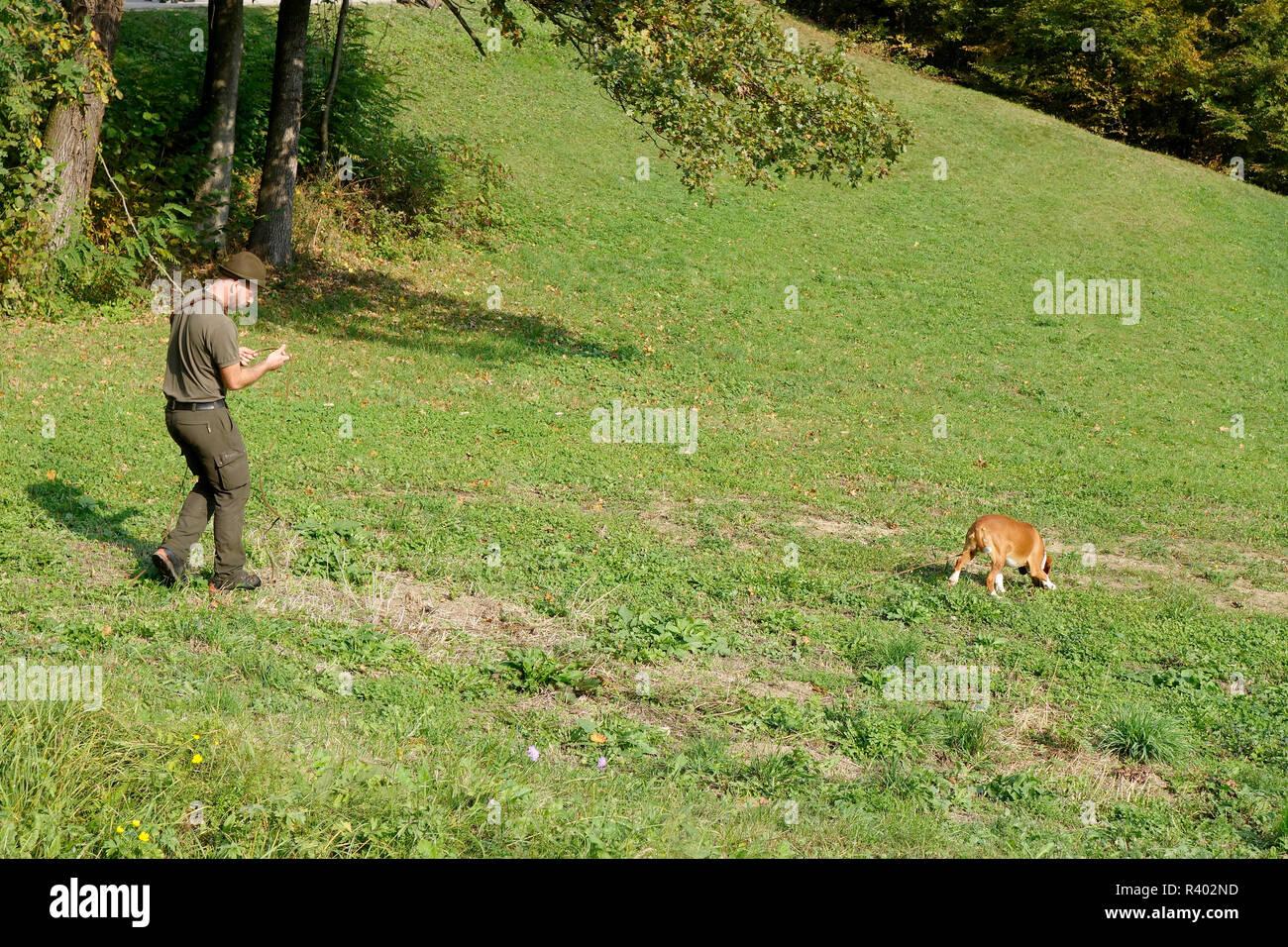 Ein Jäger mit Hund auf der Arbeit. Stockbild