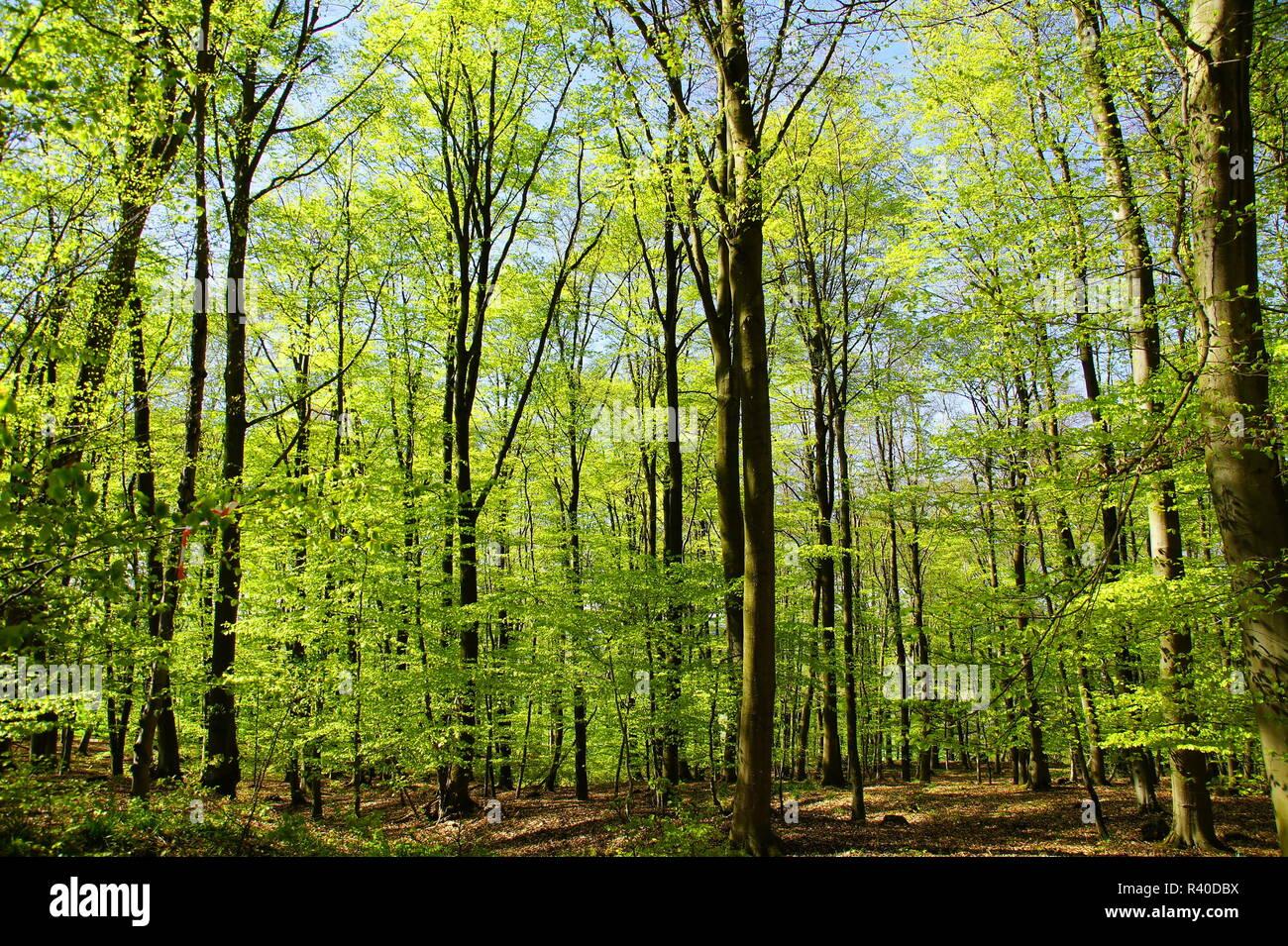Feder forestrn Stockbild