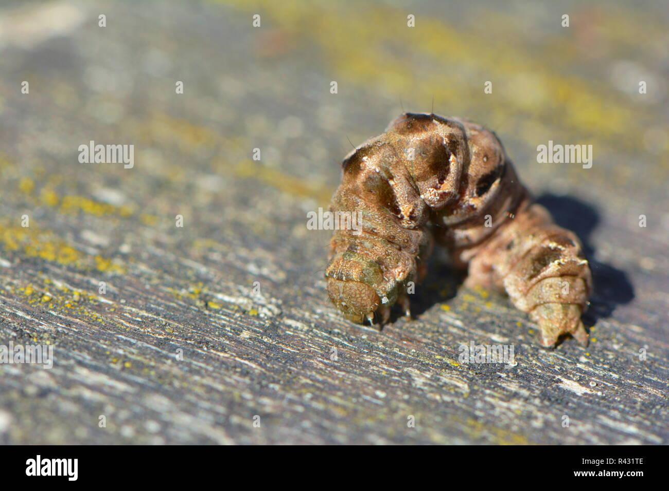 Dot Motte Stockbild