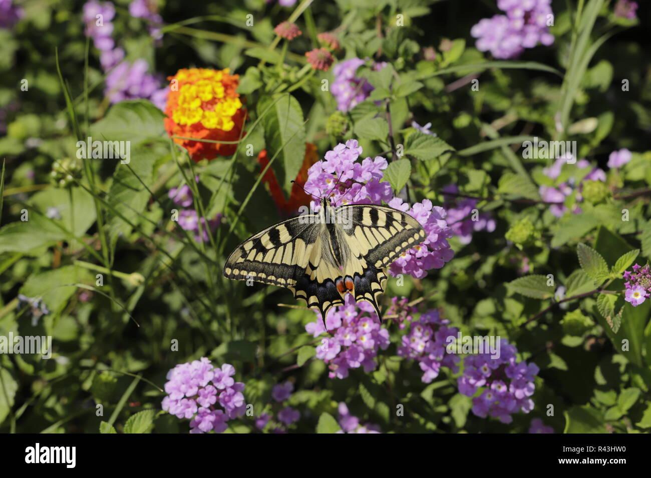 Zipping Stockfotos & Zipping Bilder Seite 2 Alamy