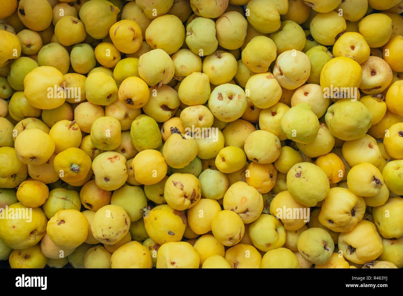 Ernte Der Früchte Quitte Stockfoto Bild 226328246 Alamy