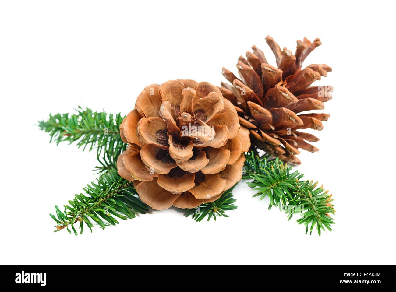 Pine Tree Branch mit Konus Weihnachten Dekoration element Stockbild
