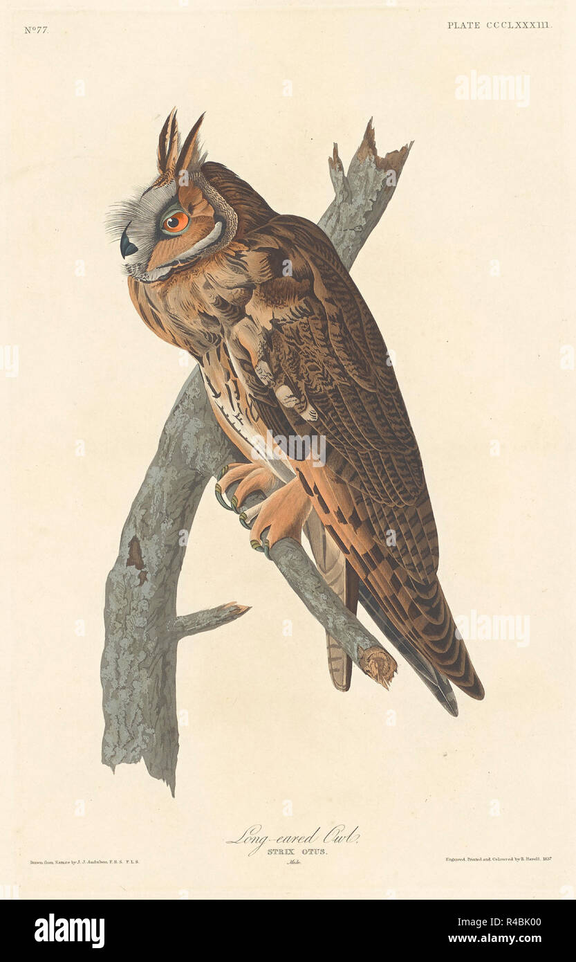 Waldohreule. Stand: 1837. Medium: Handcolorierte Radierung und Aquatinta auf Whatman Papier. Museum: Nationalgalerie, Washington DC. Autor: Robert Havell nach John James Audubon. AUDUBON, John James. Stockbild