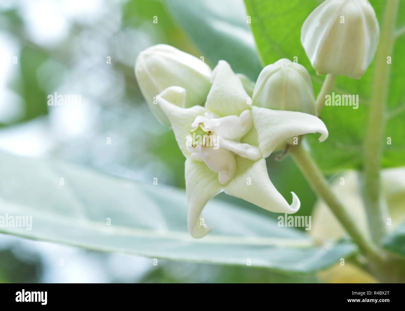 Indische Blumennamen Stockfotos Indische Blumennamen Bilder Alamy