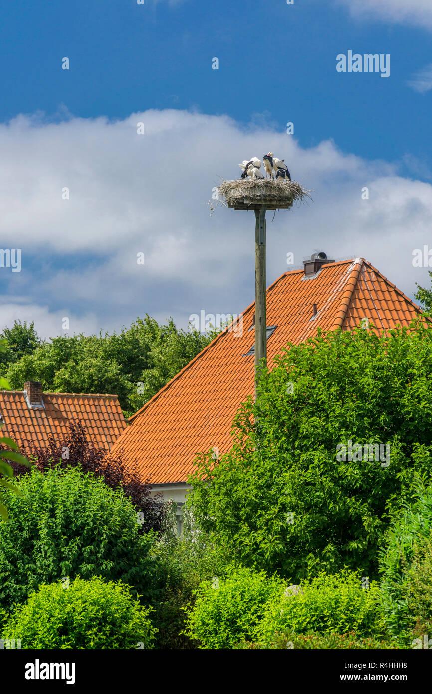 Nordfriesland, Storchennest in der Mühle Park von Wyk auf Föhr, Storchennest im Mühlenpark von Wyk auf Föhr Stockbild