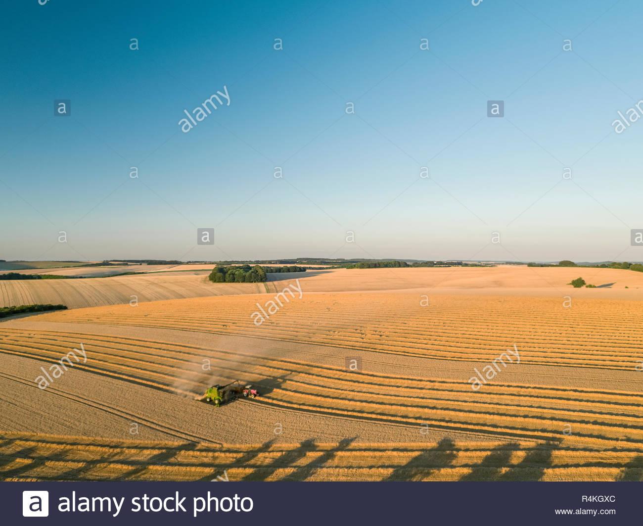 Ernte Antenne Landschaft des Mähdreschers schneiden Sommer Weizenfeld Ernte in Sunset Landschaft Licht unter blauem Himmel auf der Farm Stockfoto