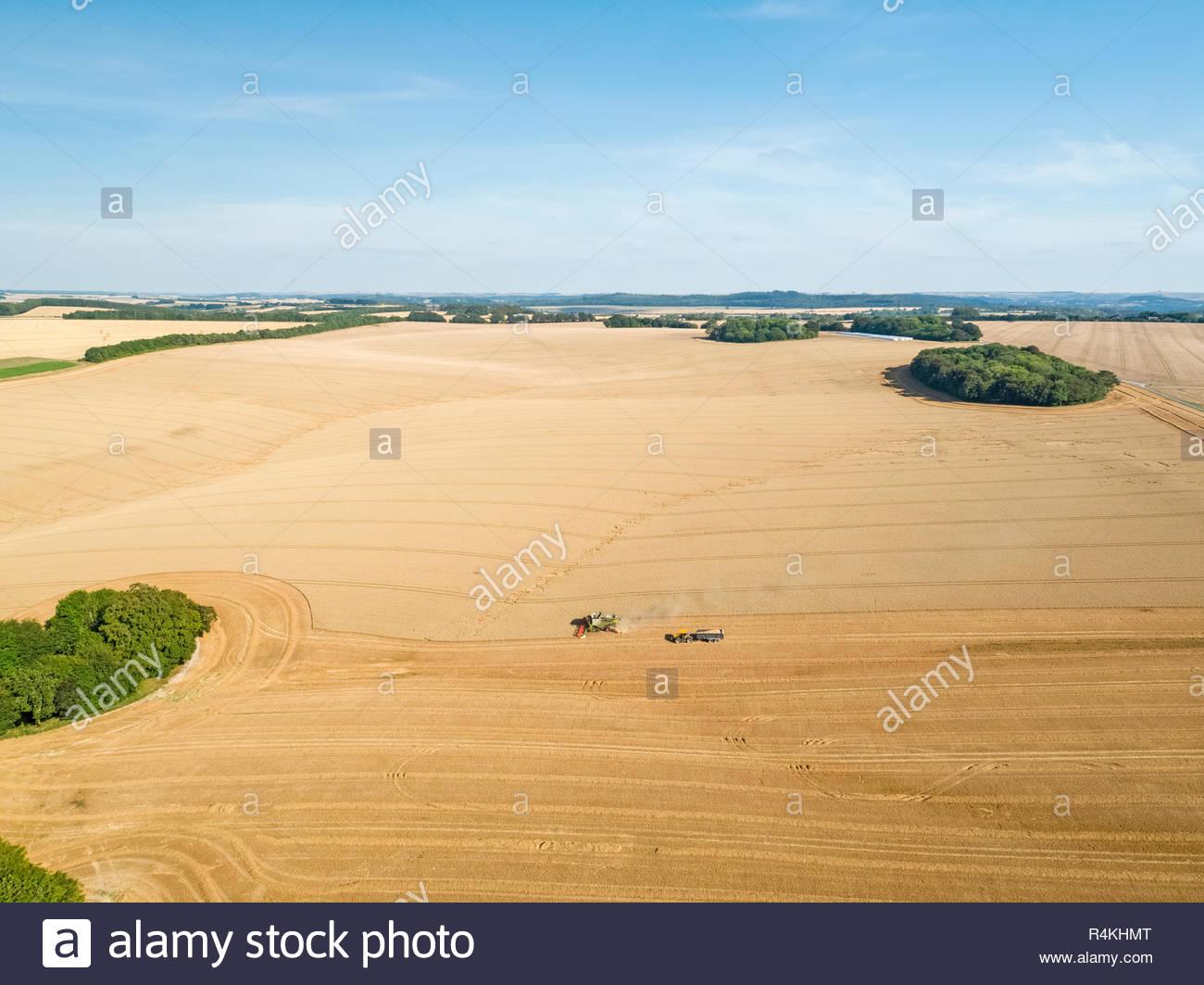 Ernte Antenne Landschaft des Mähdreschers schneiden Sommer Weizenfeld Ernte mit Traktoren Anhänger unter blauem Himmel auf der Farm Stockfoto
