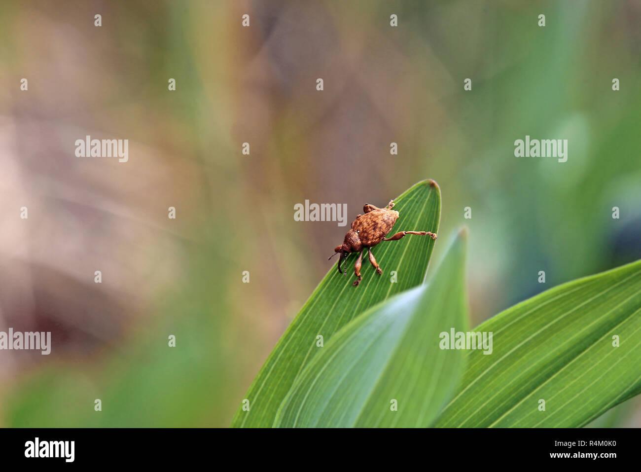 Stockbild