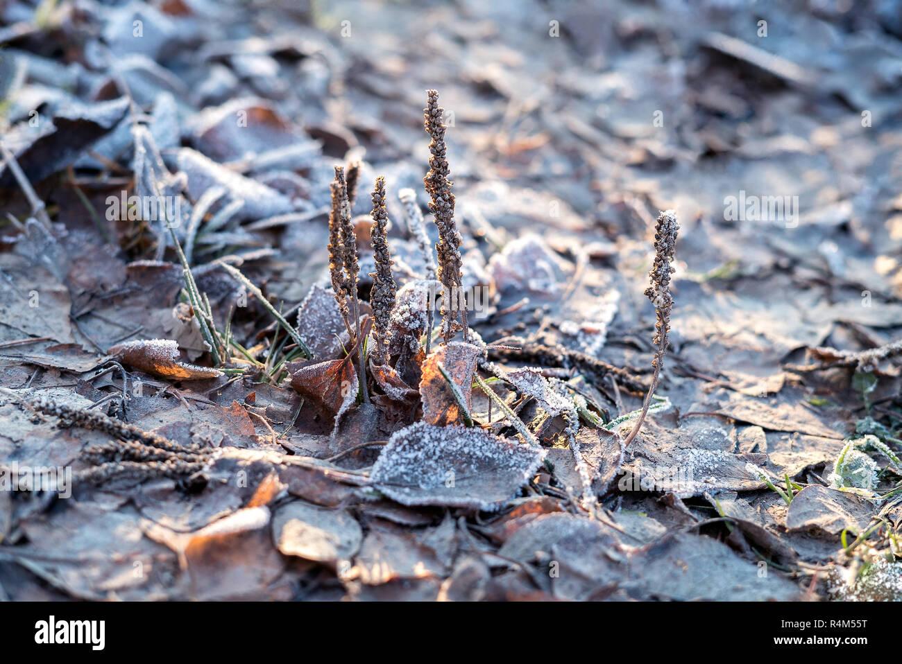 Berühmt Nahaufnahme natur Detail der kleine Milchglas eisigen Pflanzen und #NL_58