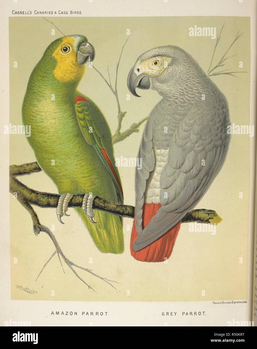 Illustrated Book Canaries Cage Birds British Stockfotos