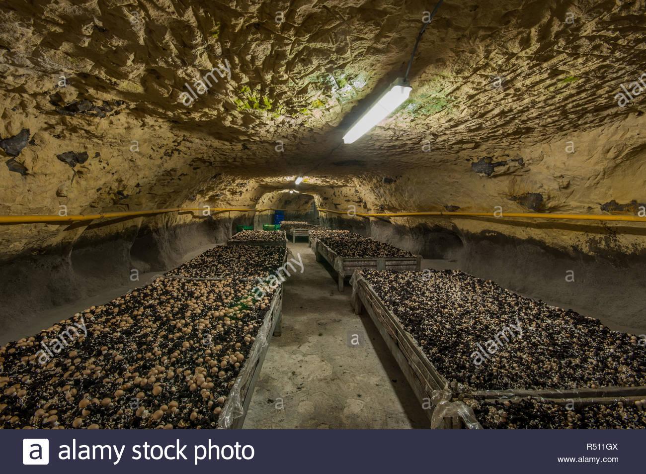u-mushroom-farm-in-einem-verlassenen-ste