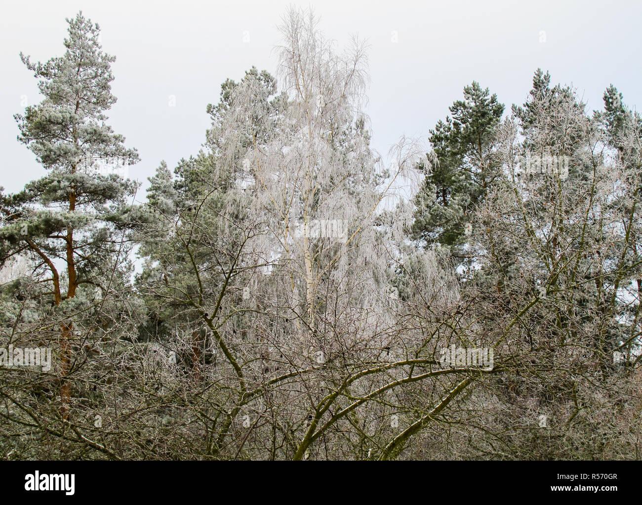 b ume mit raureif im winter garten und wald stockfoto bild 226962199 alamy. Black Bedroom Furniture Sets. Home Design Ideas