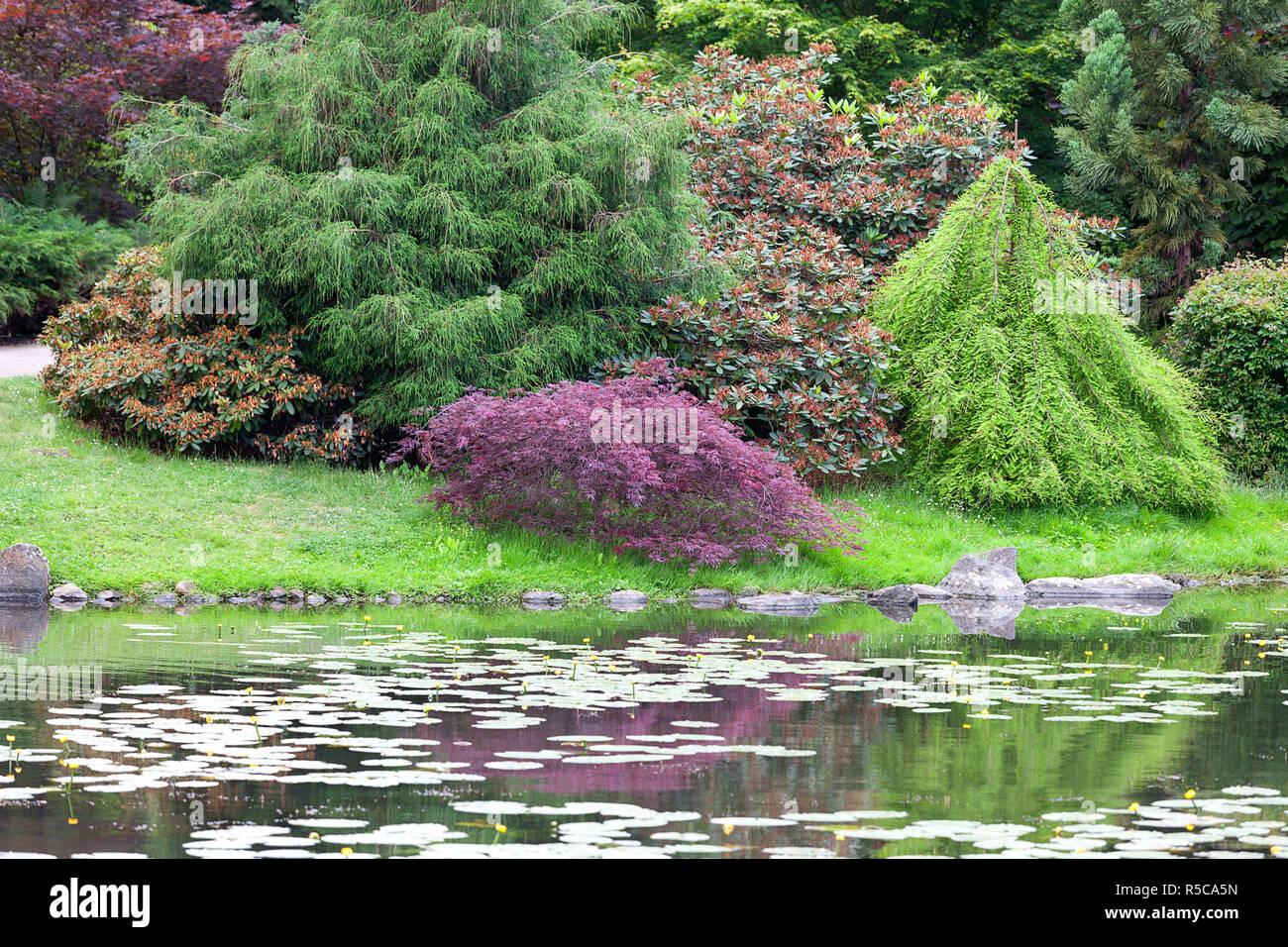 Lieblings Japanischer Garten, exotischen Pflanzen, Wroclaw, Polen Stockfoto @FF_11