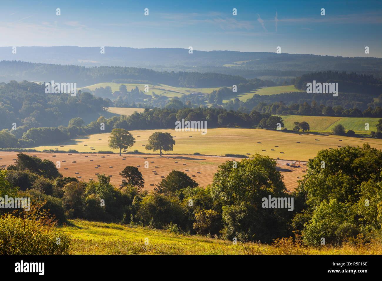 North Downs, Surrey, England, Großbritannien Stockbild