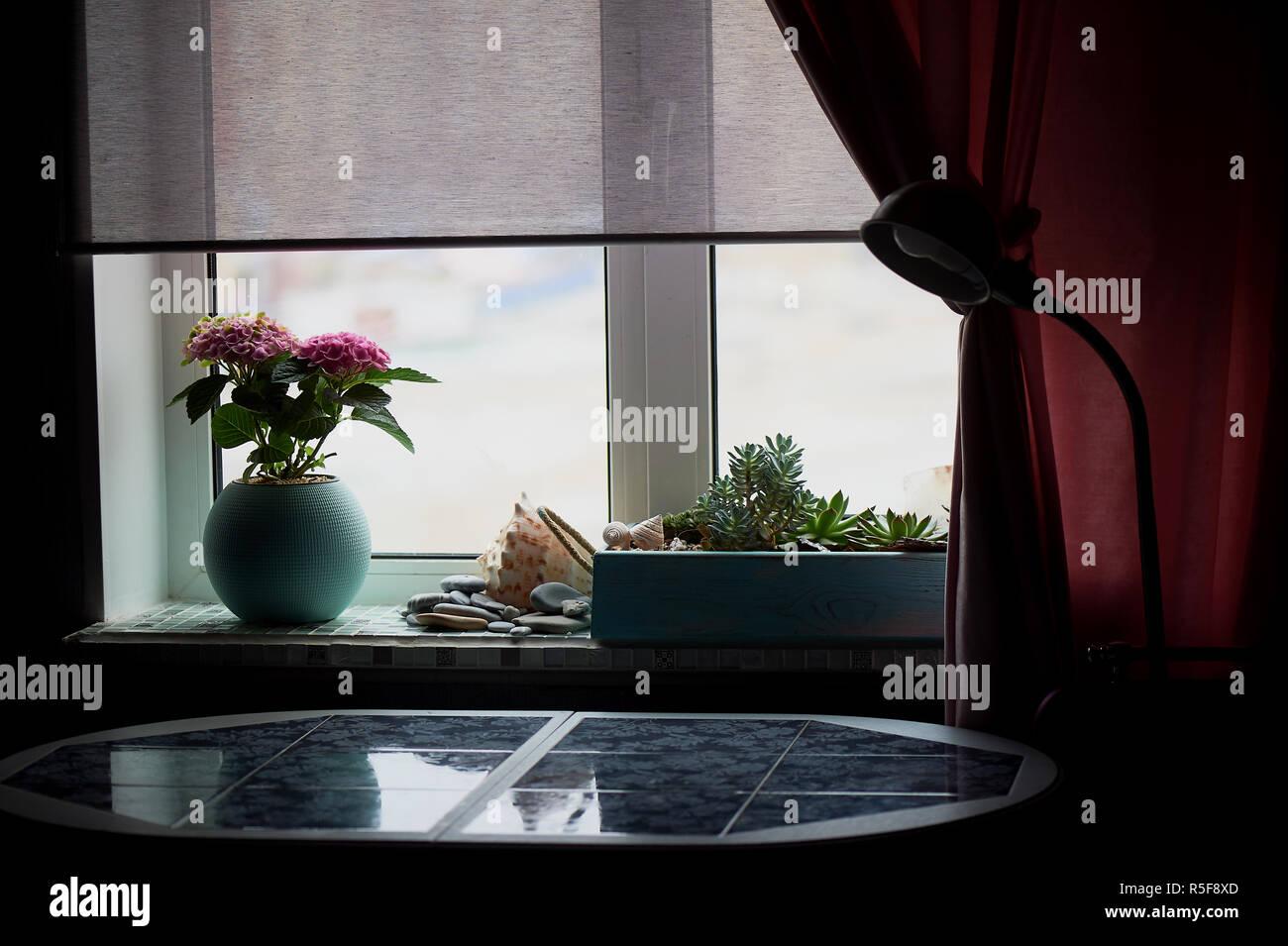 Ein Topf von pink hydrangea im Haus. Im Winter. Blühende Pflanze in einem Topf. Stockbild
