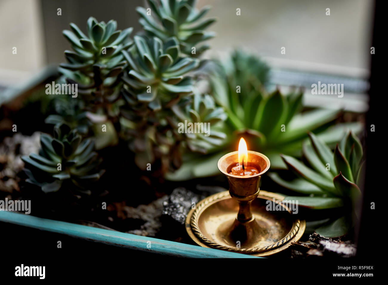 Die Kerze brennt in einem kleinen Messing Leuchter, zwischen dem Grün der Sukkulenten. Makro. Gefühl von Wärme und Komfort. Das Gebet, Dankbarkeit Stockbild