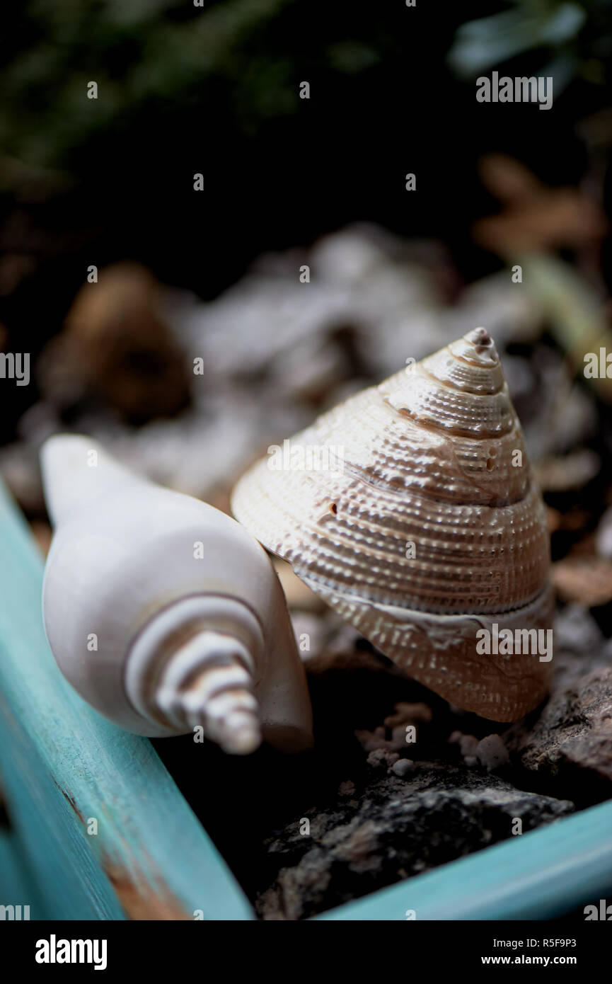 Seashells in Sukkulenten. Dekoration home Töpfe und Blumenkästen Stockbild