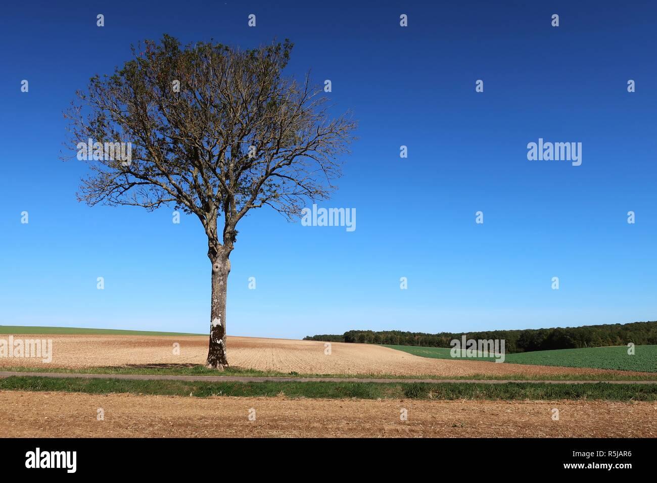 Einsamer Baum stehend stark und stolz Stockbild