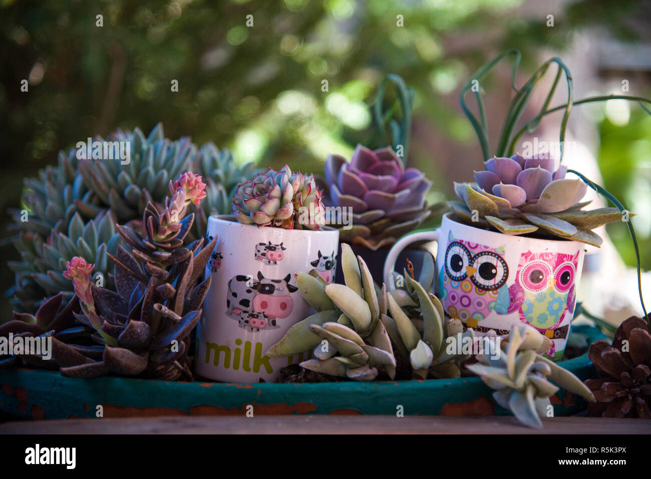 Kaktus Feengarten Stockfotos Kaktus Feengarten Bilder Alamy