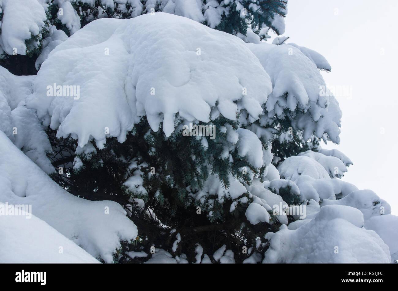 Grune Flauschige Tanne Baum Im Schnee Weihnachten Wallpaper Konzept