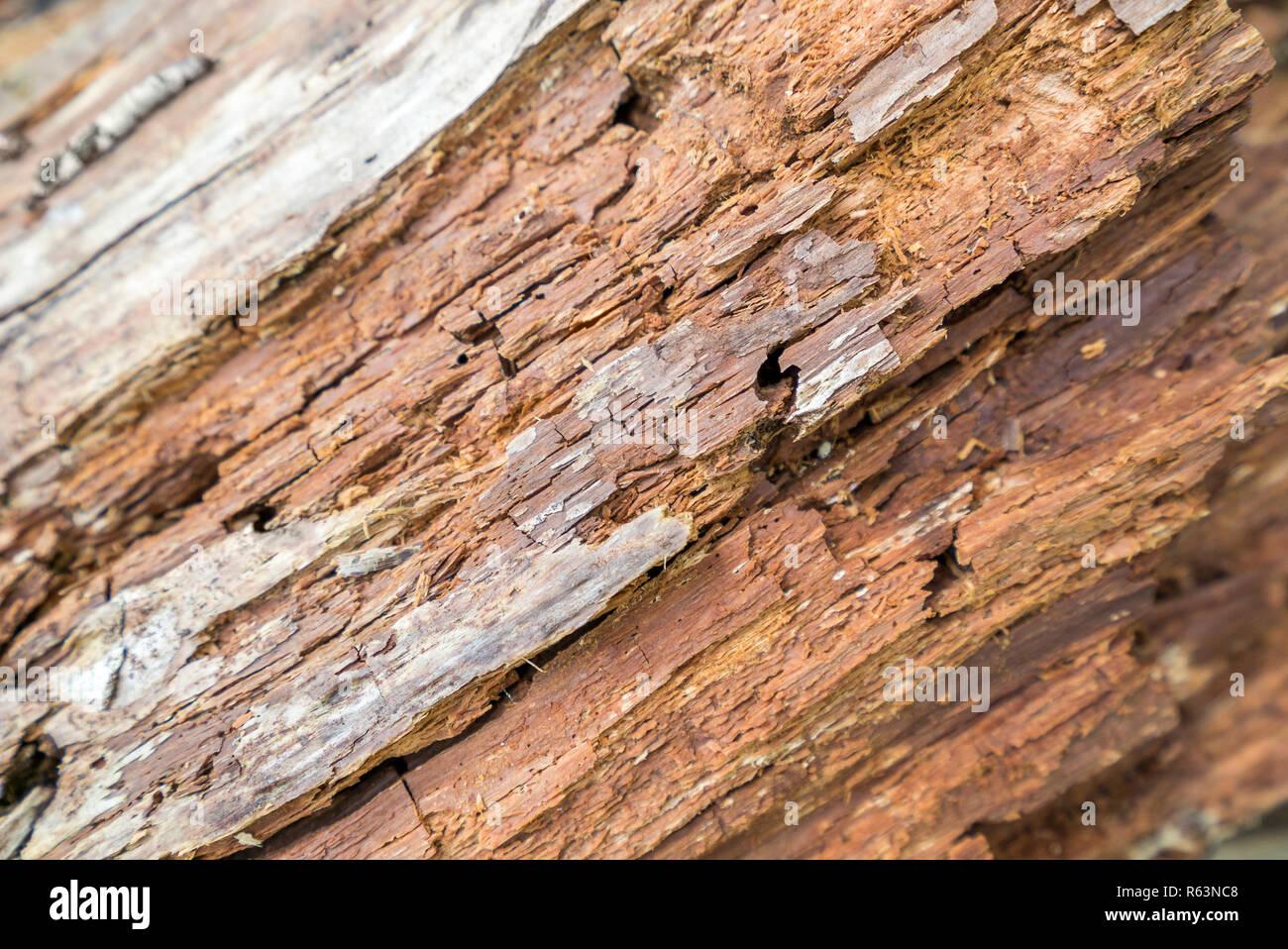 Full Frame verrottendes Holz detail Stockbild