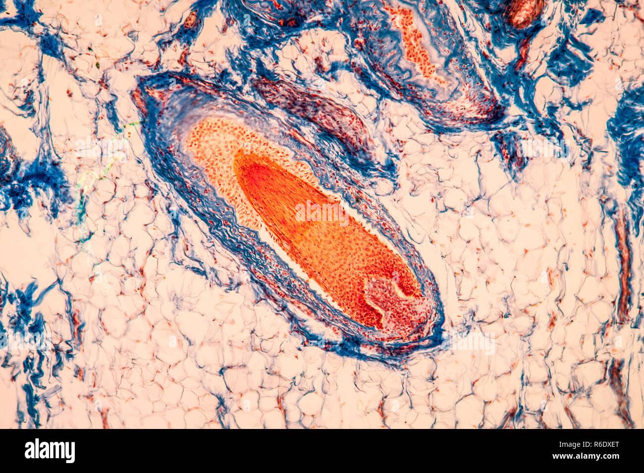Deckblatt biologie mikroskop longitudinal cells stockfotos
