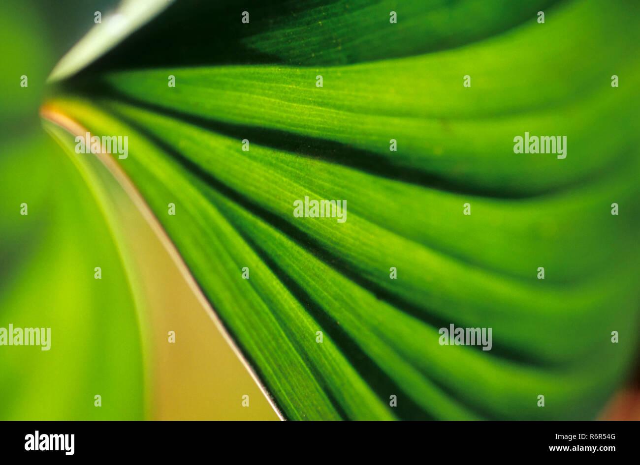 Konzept - Abstrakte, Blätter, Indien Stockbild