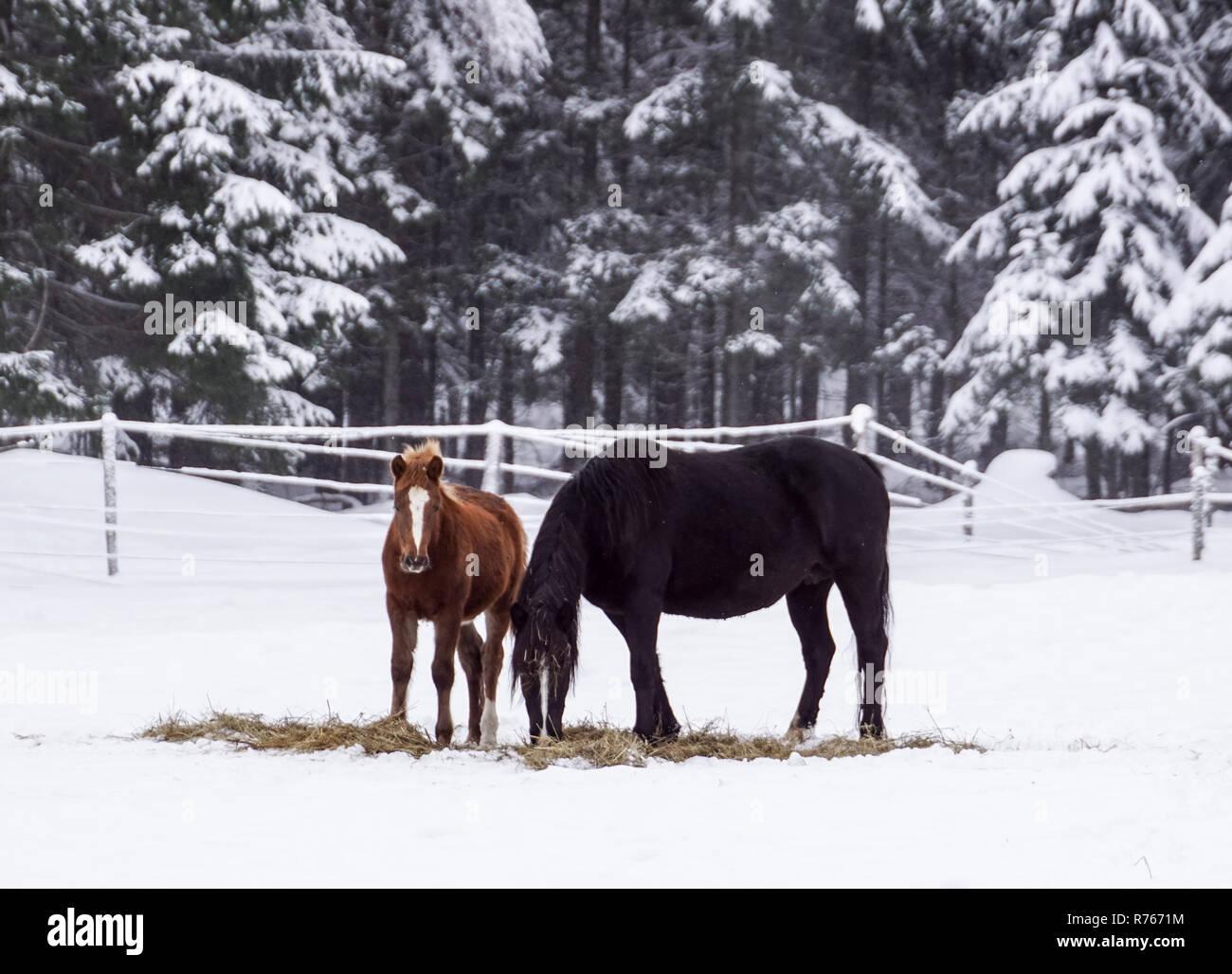 Kostenlose Schone Braune Pferd Geniesst Schnee Und Sonne Im Winter