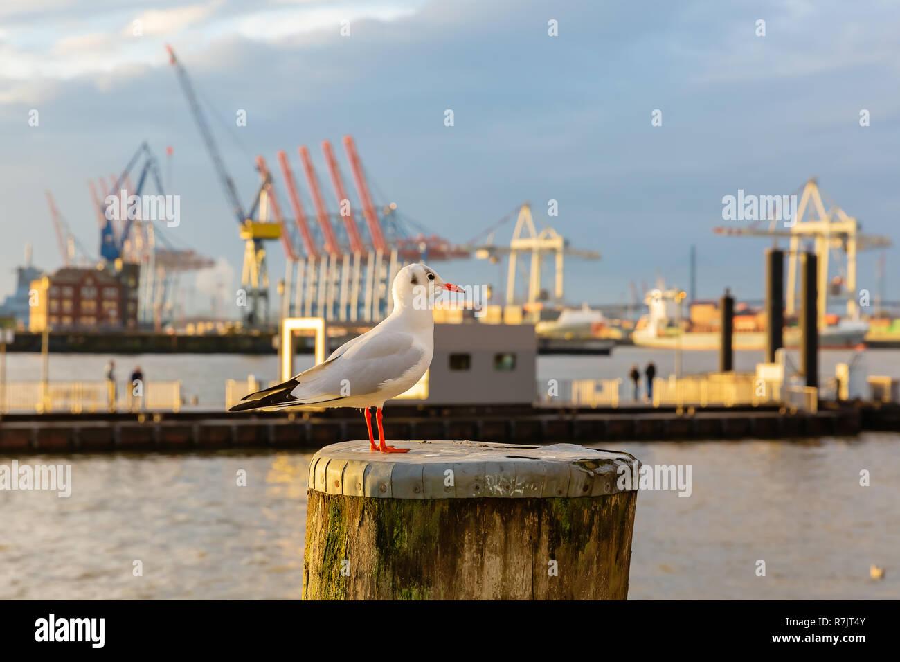 Möwe Auf Poller Vor Dem Meer Hafen In Hamburg Sitzen Deutschland