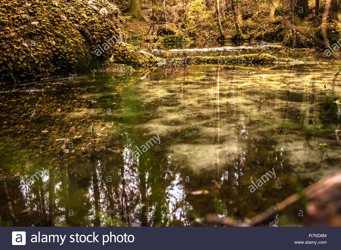 Kleiner Teich im Wald Stockbild