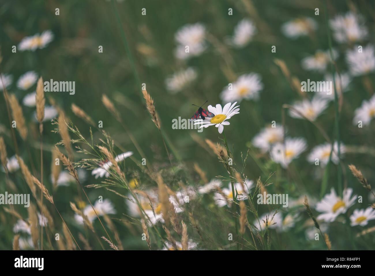 8df169aefd90 Sommer Blumenmuster in grüne Wiese mit blauen und weißen Blumen und  Pflanzen. strukturierten Hintergrund Details der Natur - vintage alten Film  ansehen