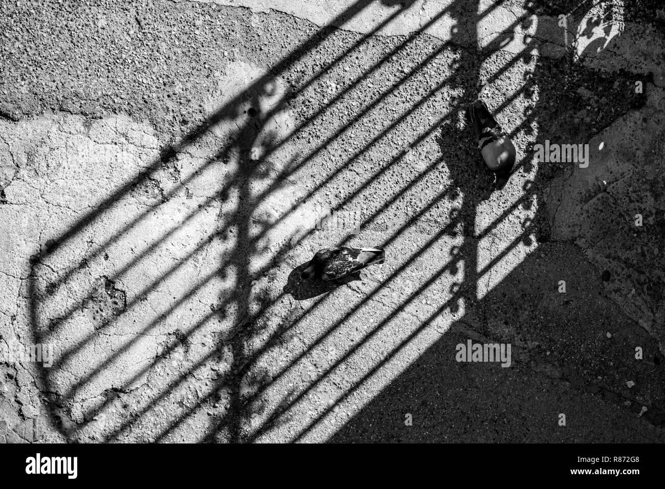 Zwei Tauben Ihre Liebe Spiel Spielen Unter Dem Schatten Der Schonen