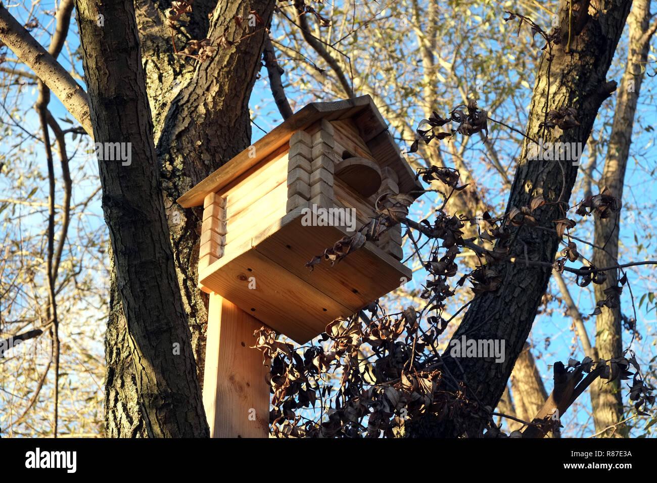 Große neue Holz- Vogelhaus hängend an einem Baumstamm an einem sonnigen Tag im Herbst Wald Stockbild