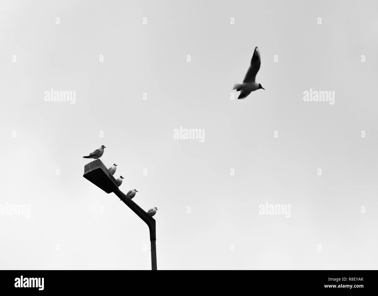 Ein Vogel fliegen und andere Vögel beobachten Stockbild