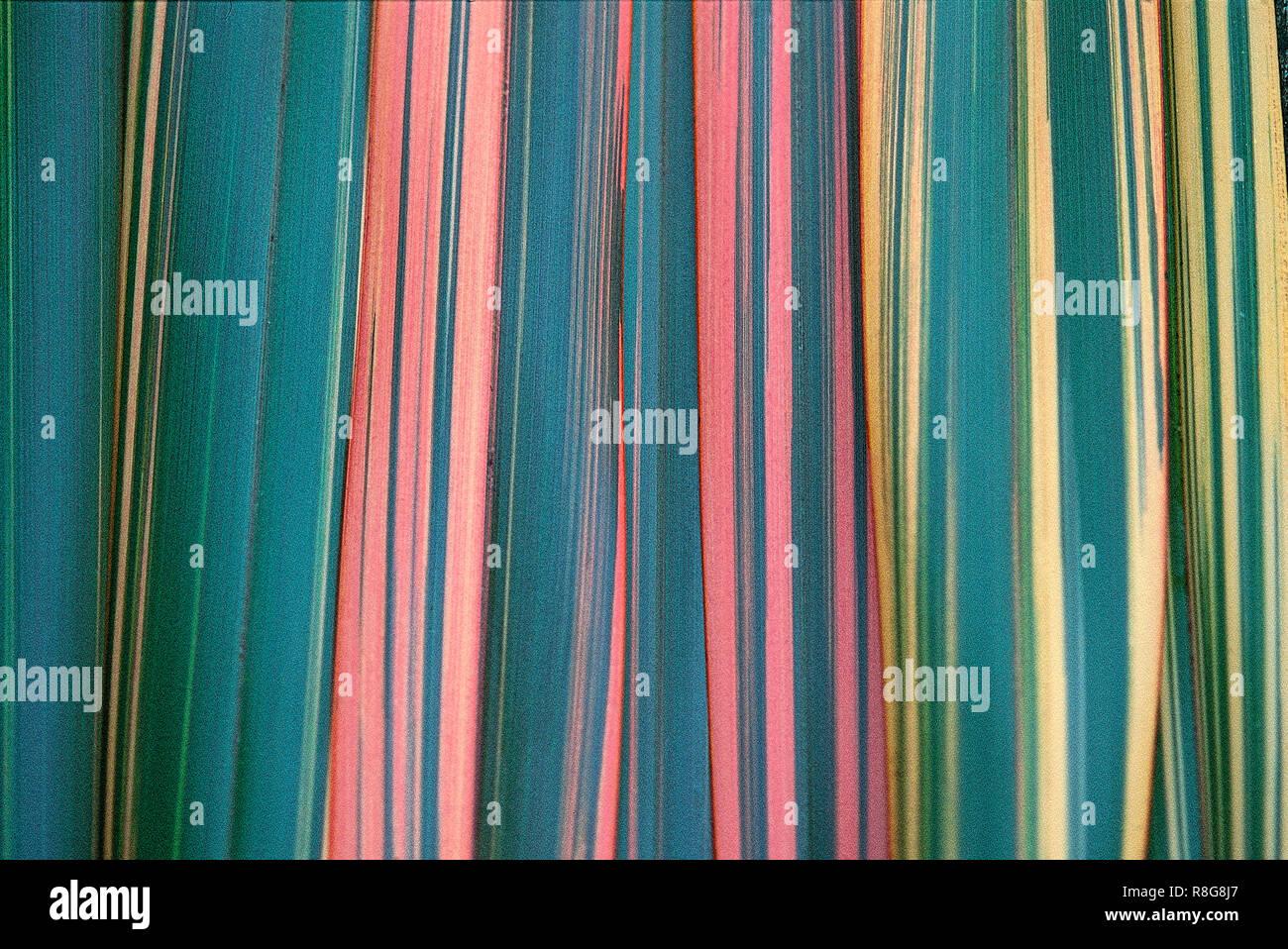 Phormium Blätter in ein abstraktes Muster angeordnet Stockfoto