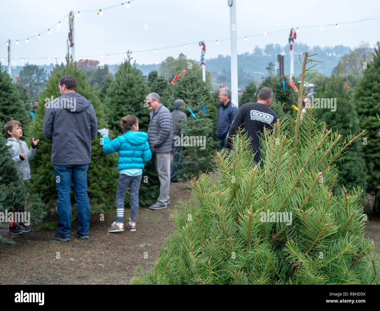 Käufer durchsuchen für natürliche Weihnachtsbäume an Pronzini baum Markt mit Baum im Vordergrund. Stockbild