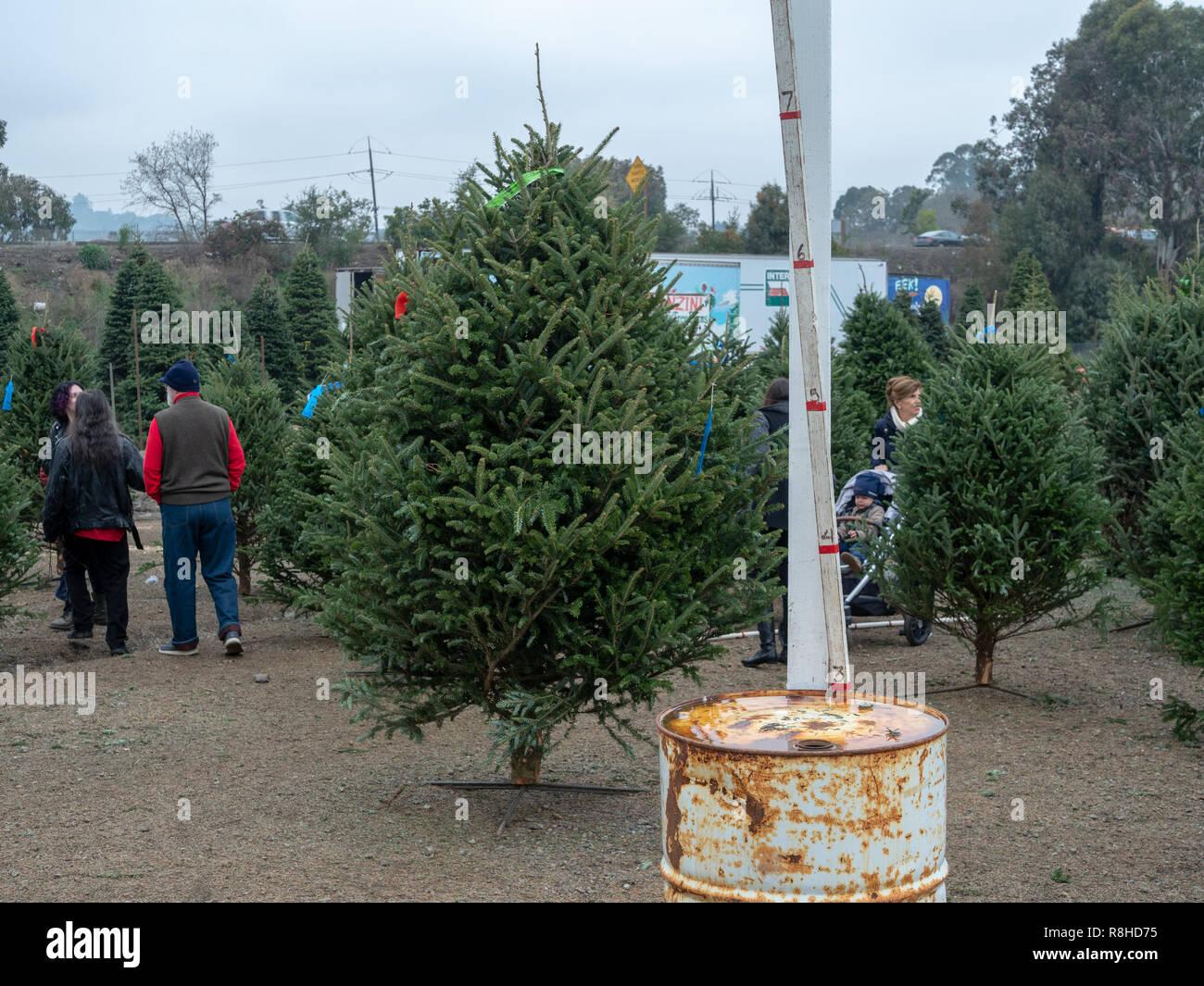 Weihnachtsbaum Messstab bis zu 7 Fuß an natürlichen Markt Stockbild