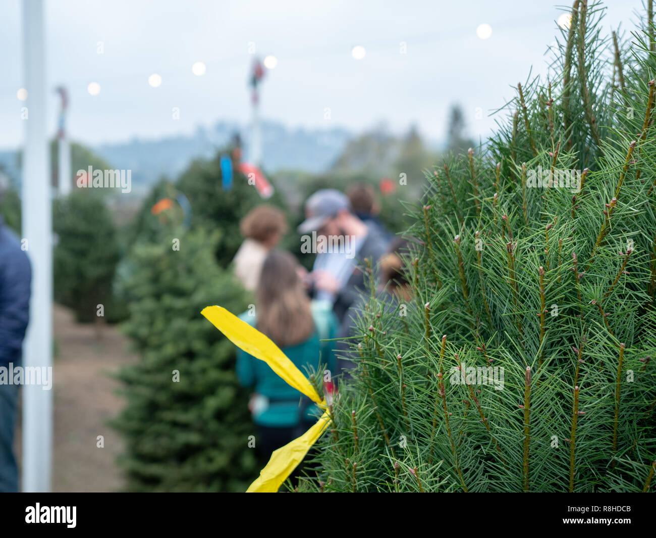 In der Nähe von Douglas Tanne Weihnachtsbaum am Markt mit Gönner shopping Stockbild