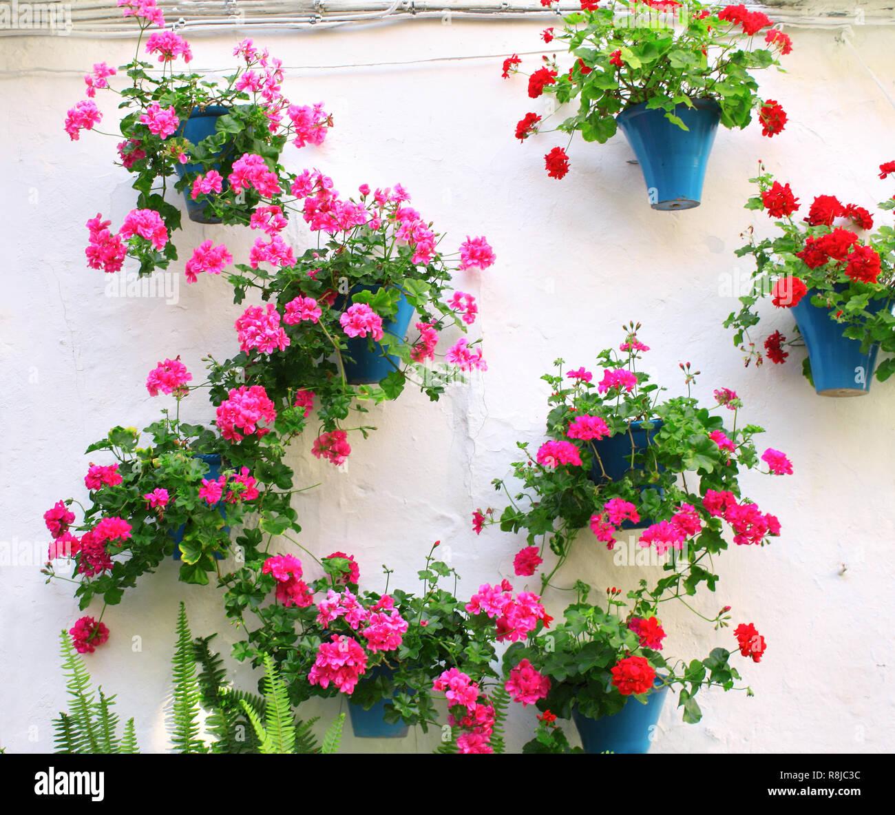 Blumentopfe Mit Geranie Auf Stuck Wand Stockfoto Bild 229056672