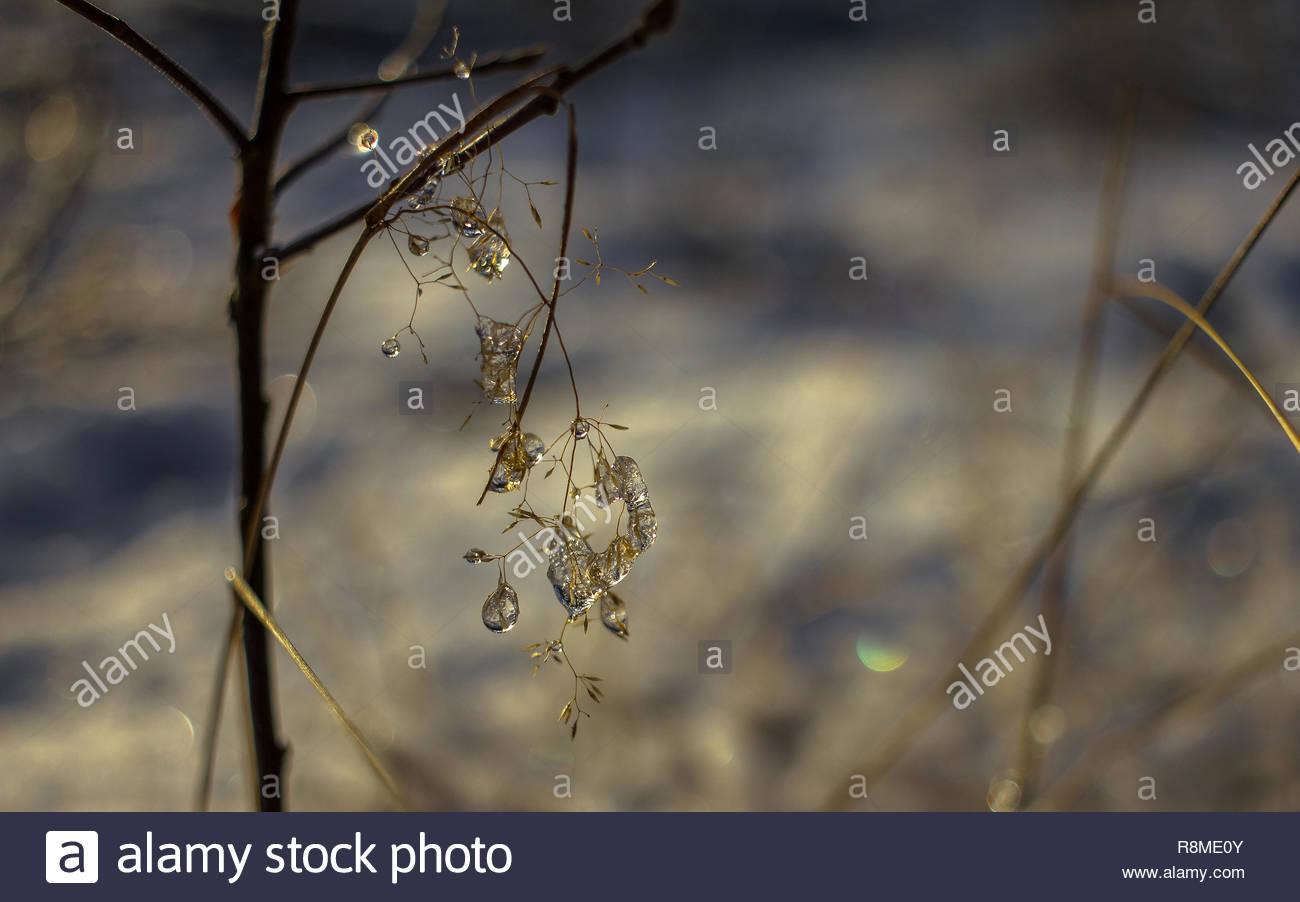 Empfindlichen Pflanzen mit Eis Tropfen Stockbild