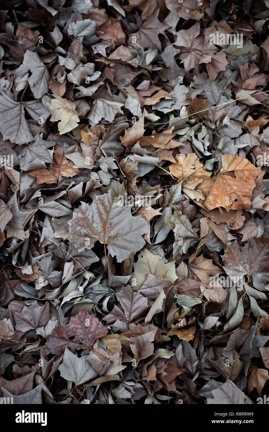 Blätter im Herbst. Stockbild